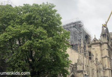 Travaux Notre Dame de Paris 2019