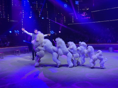 Cirque Bouglione